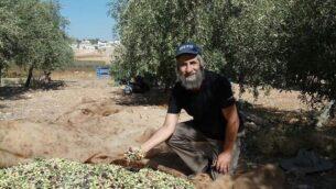دافيد كيشيك-كوهين في كرم الزيتون الخاص به خارج مستوطن كوخاف هشاحر. (via WhatsApp)