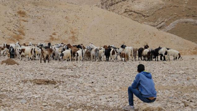توضيحية: راعي بدوي يراقب أغنامه في صحراء يهودا، 26 أكتوبر، 2019. (Sara Klatt / Flash90)