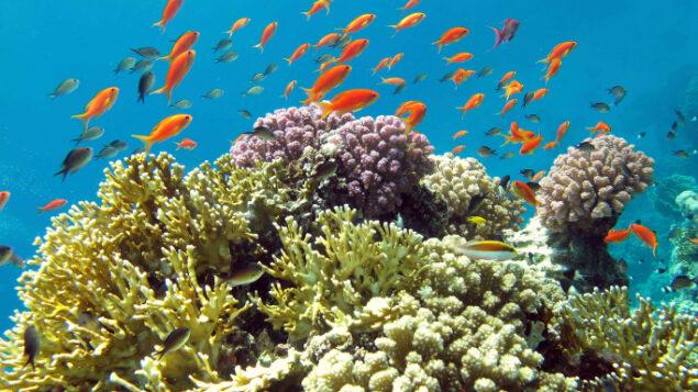 الأسماك الاستوائية في إيلات (Asaf Zvuloni/ Israel Nature and Parks Authority/FLASH90)