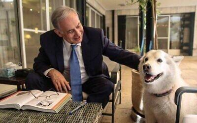 رئيس الوزراء بنيامين نتنياهو مع كلبته كايا في مقر اقامة رئيس الوزراء في القدس، ديسمبر 2015 (Facebook)