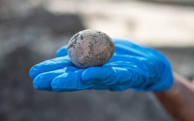 بيضة عمرها 1000 عام تم العثور عليها في أعمال تنقيب أثرية في يافني. (Yoli Schwartz/Israel Antiquities Authority)