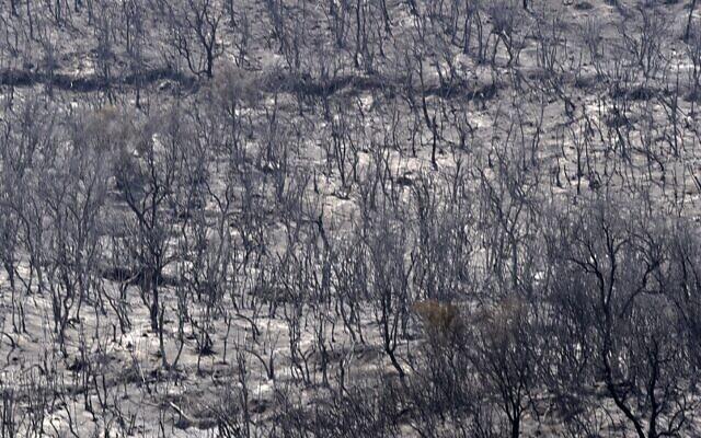 أشجار متفحمة في أعقاب حريق غابات في التلال الحرجية بمنطقة القبائل، شرق العاصمة الجزائرية، الجزائر ، في 11 أغسطس، 2021. ( Ryad KRAMDI / AFP)