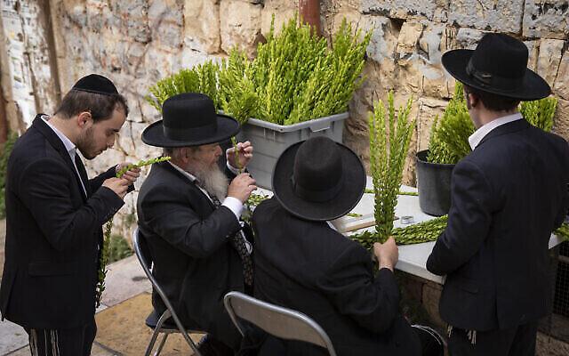 رجال يهود متشددون يفحصون فرعًا من نبات الآس في حي مئة شعاريم في القدس، 19 سبتمبر، 2021. (Olivier Fitoussi / Flash90)