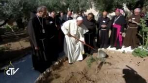 البابا فرانسيس يزرع شجرة في بستان الزيتون  (Screen capture: Vatican TV)