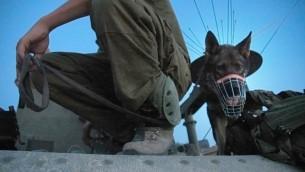 ثورة توضيحية لجندي من وحدة الكلاب في الجيش 'عوكيتس' (Omer Messinger/Flash90)