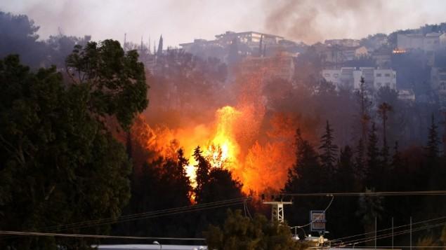 النيران المستعرة في حيفا، 24 نوفمبر، 2016. (AFP PHOTO/AHMAD GHARABLI)