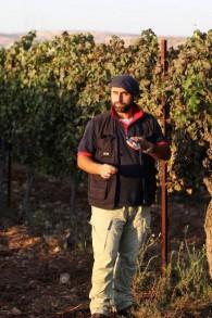 صانع النبيذ اليهودي دافيد فينتورا من مستوطنة عوفرا في الضفة الغربية يقوم بفحص مستوى السكر في العنب في كرمه في 18 سبتمبر، 2011. (Kobi Gideon/Flash90)