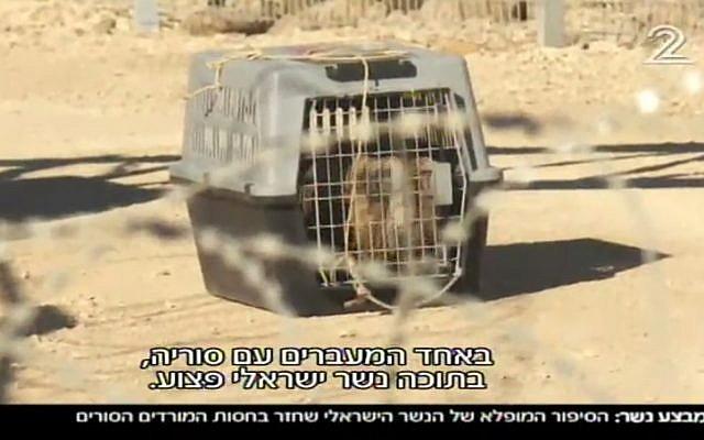 النسر، داخل قفص، وصل المعبر الحدودي الإسرائيلي في شهر سبتمبر 2017 (Channel 2 screenshot)