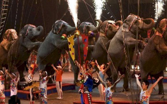 Dancing elephants at Ringling Bros. Barnum & Bailey Circus