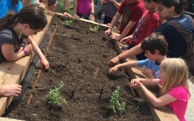 Families plant beans at the JF&CS Giving Garden.