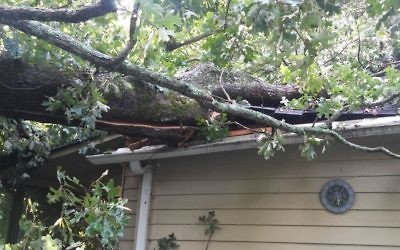 Irma was just beginning to hit East Cobb hard when this tree toppled from a neighbor's yard onto the AJT editor's house Sept. 11.