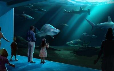 The shark gallery will have several species. (Geprgia Aquarium rendering)