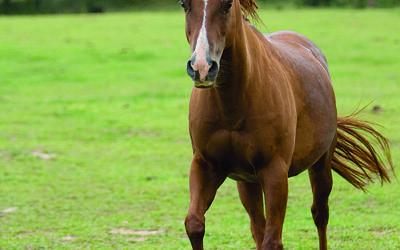 Robin Vogt's horses.