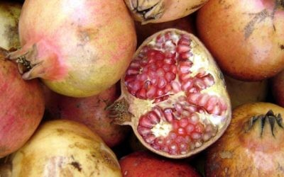 The pomegranate with its supposed 613 seeds serves as a reminder to multiply our merit.