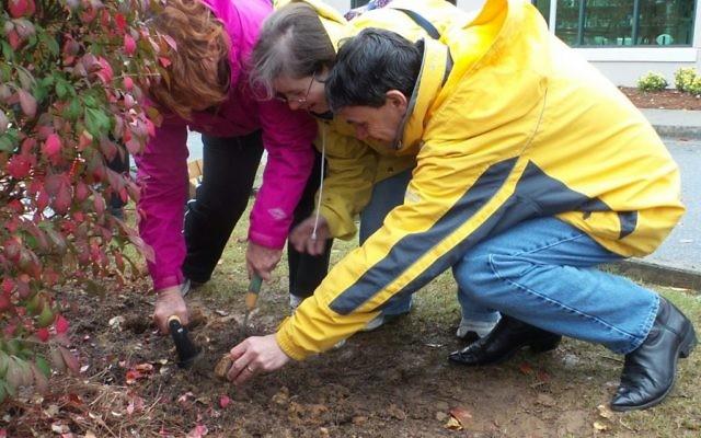 Beth Shalom members Terrie (left), Lori and David Bryan plant daffodil bulbs.