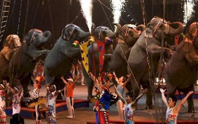 Dancing elephants at Ringling Bros. Barnum & Bailey Circus