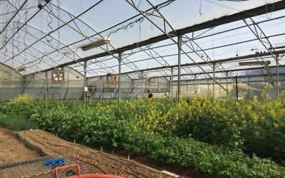 Vegetables and flowers thrive in the garden cultivated as part of Kfar Silver's agricultural leadership program.