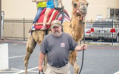Rufus the camel has room for two youths to ride.
