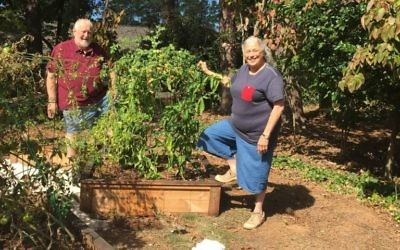 Allen and Judy Lipis enjoy the harvest of their vegetable and herb garden.
