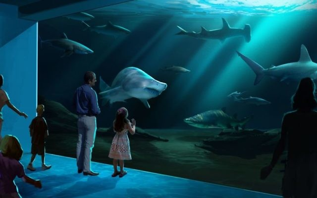 The shark gallery will have several species. (Geprgia Aquarium rendering)