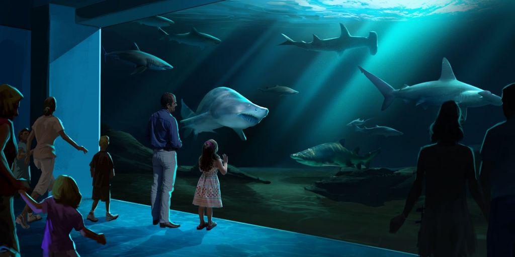 georgia aquarium jumps into the shark tank atlanta jewish times