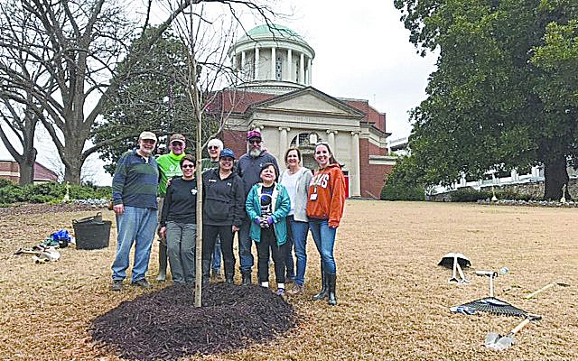 Members of The Temple are pleased with the tidy spot they secured for the memorial red maple along Peachtree Street.