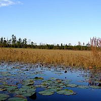 The Sierra Club of Georgia has  been working to  defeat a proposal to allow the mining of titanium in the  Okefenokee Swamp in South Georgia.