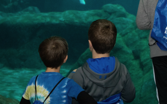 The Oceans Ballroom offers a great view of whales, sharks and more in the aquarium.