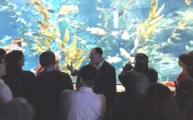 Fish can be a source of Jewish learning, according to Rabbi Becher.