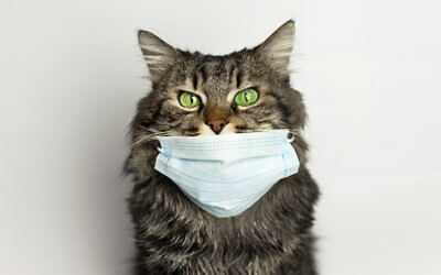 Cat wearing medical mask because of coronavirus or air pollution or virus epidemic in the city.