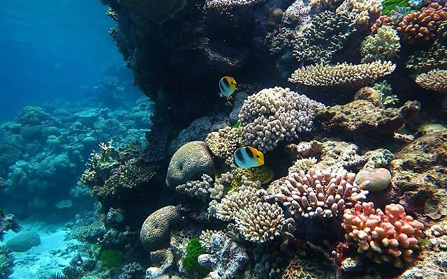 Maybe you can't go to the Great Barrier Reef right now, but you can experience the natural wonder from your couch.