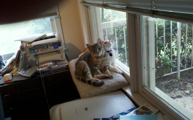 Cupcake and Hannah - Francine of Buckhead 9- and-10-year old cats