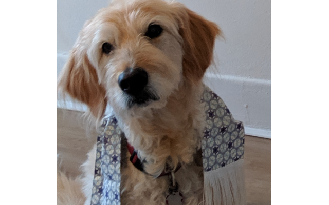 Reese - Michelle of Sandy Springs 14-year-old goldendoodle