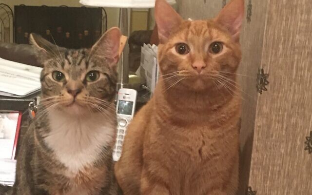 Squeaks & Rocky - Jodi Danis: Executive Assistant 3-year-old tabbies