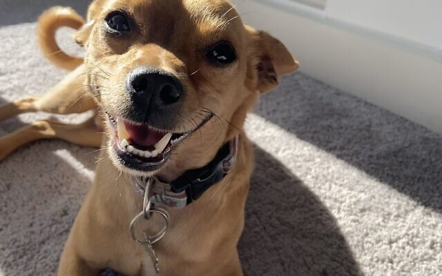 Rolo - Tamar of Sandy Springs 3-year-old terrier mix