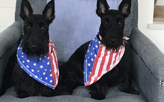 Tybee and Peanut - Randi and Sid of Buckhead 2-year-old Scottish terriers