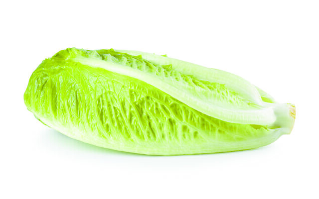 Cos lettuce isolated on a white background.