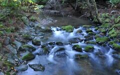 Photo by Rob Spaugh // A stream with moving water is a perfect setting for conducing Tashlich.