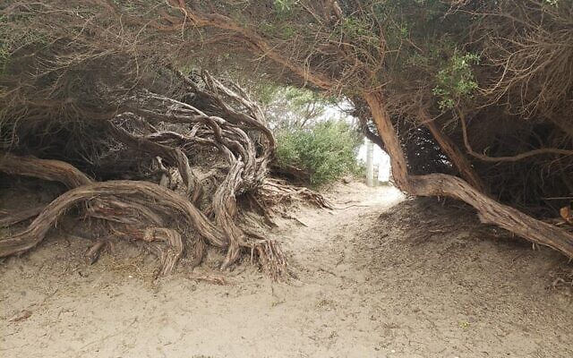 A photo the Shaws took in Morro Bay State Park.