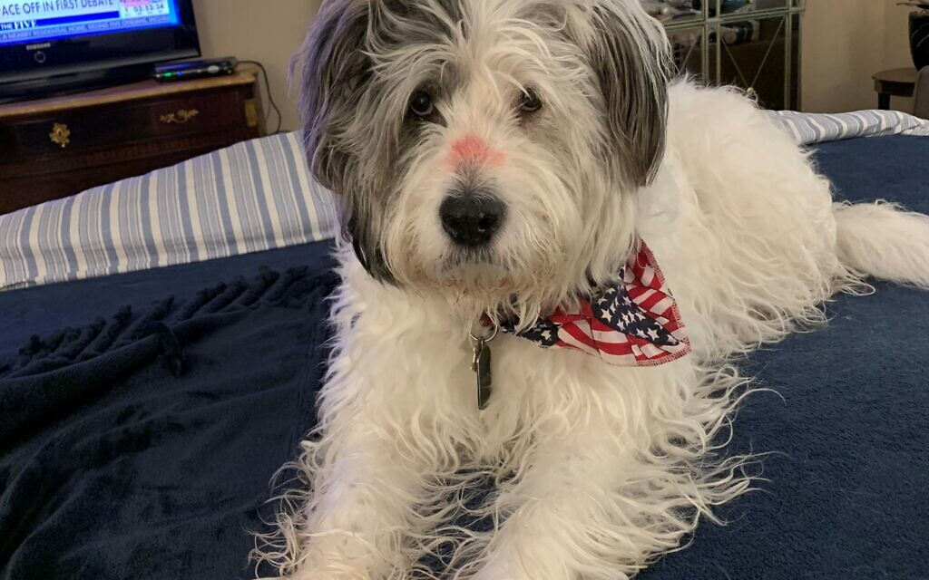 Harvey Max - Lynne Greenfield 13-year-old Bearded Collie/Terrier Mix.