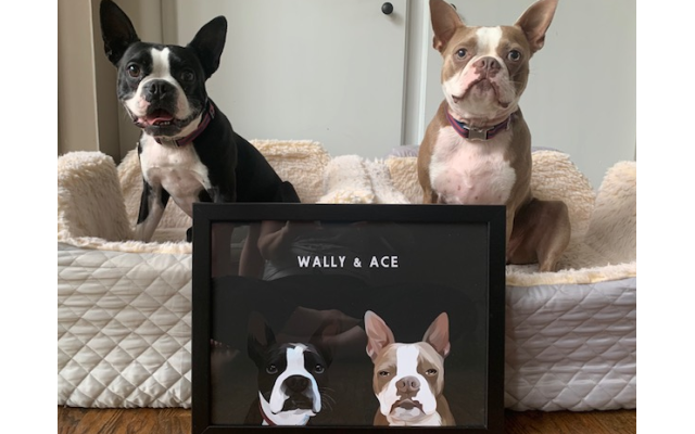 Wally and Ace - Susan and William Sheilds'4 and 7-year-old Boston Terrier.