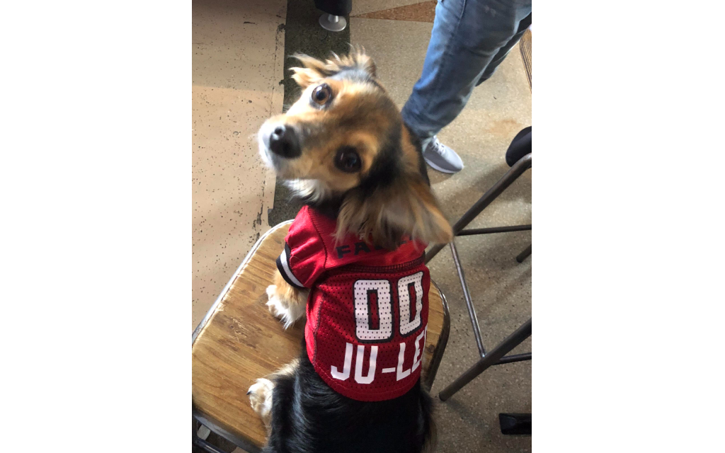 Leonard Leibowitz - Jacob Shmukler's 4-year-old Long-Haired Chihuahua Mix/Mutt.