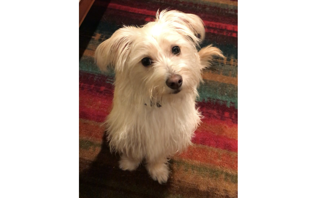 Diego Li  - Edye & Rob Disner's 10-month-old Shitzu Terrier Mix.