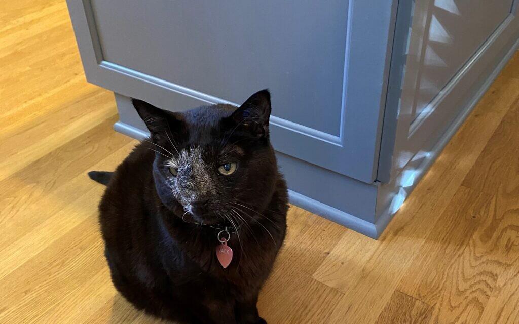 Jack -  - Lisa Handman's Cat.