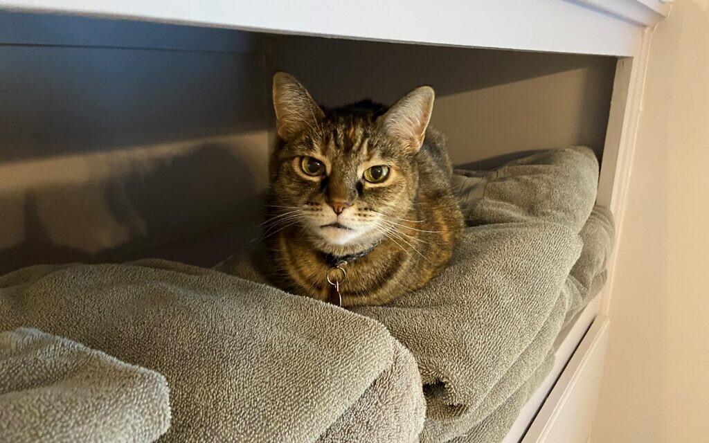 Lily -  - Lisa Handman's Cat.