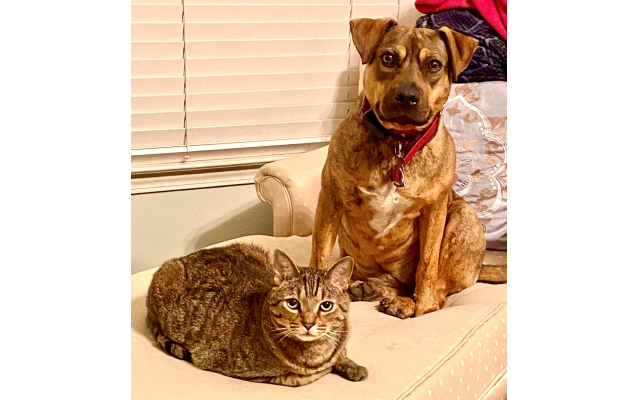 Jasmine and Apollo - Audrey Helfman's Brindle Mountain Cur Mix and Cat.