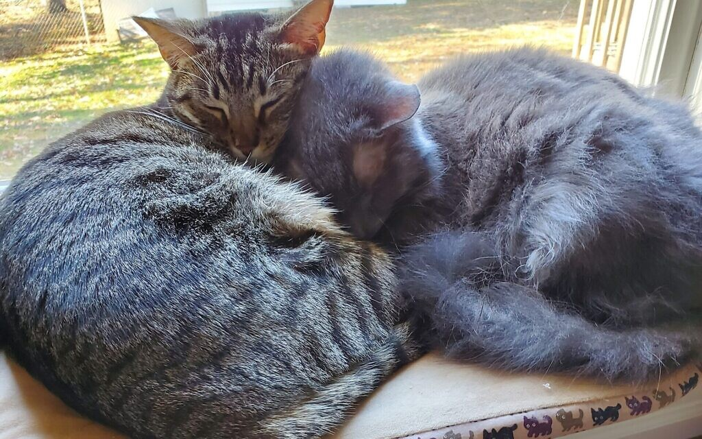 Cody and Leila - Ilene Rothstein's 15 and 2-year-old Cats.