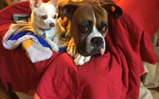 Rothman's own pets, Iddie and Oliver.
