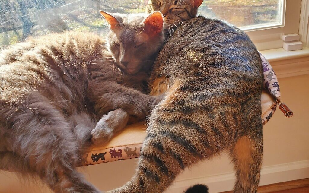 Cody and Leila - Ilene Rothstein's 2 and 15-year-old Cats.