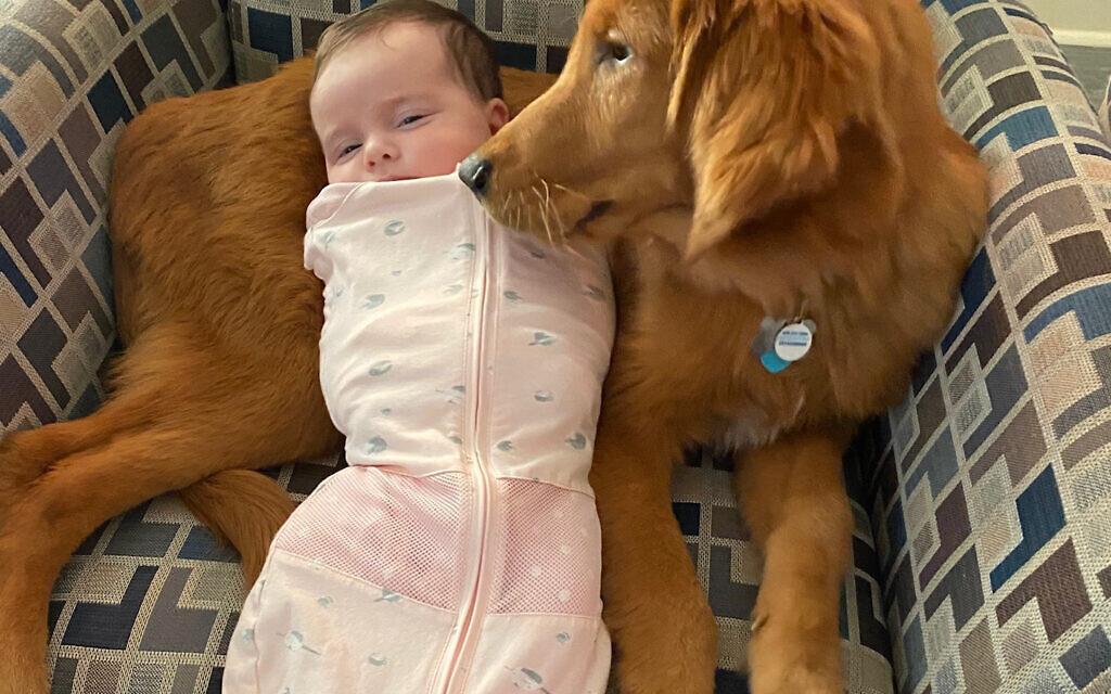 Munson - Joanne Birnbrey's 1-year-old Golden Retriever.
